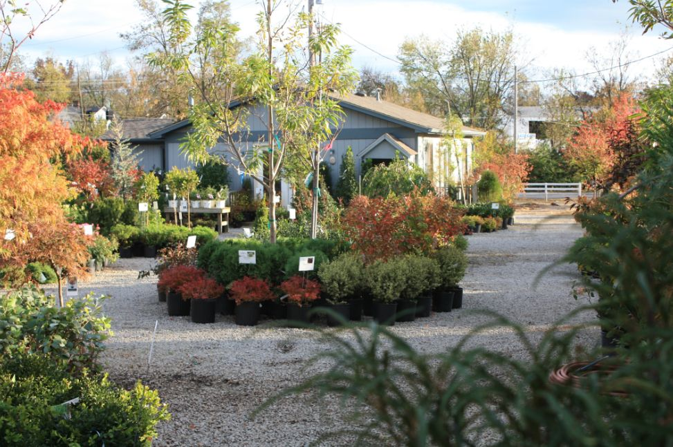 Glynn Young S Landscaping Nursery Center Lexington And Nicholasville Ky