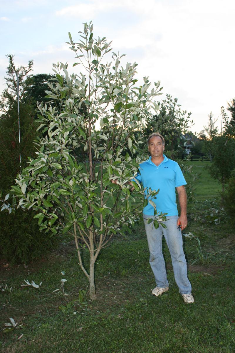 Tree Farm Glynn Young S Landscaping Amp Nursery Center