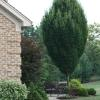Landscape Favorites Glynn Young S Landscaping Amp Nursery
